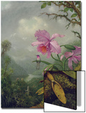 Hummingbird Perched on an Orchid Plant, 1901 Posters par Martin Johnson Heade