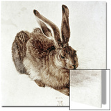 The Young Hare Posters by Albrecht Dürer