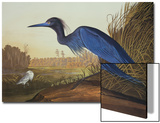 Blue Crane Or Heron Art by John James Audubon
