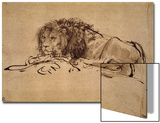 Lion Resting, Turned to the Left Print by  Rembrandt van Rijn