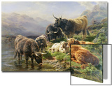 Highland Cattle Prints by William Watson
