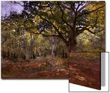 Bodmer Oak, Fontainbleau Forest Poster by Claude Monet