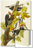 Pileated Woodpecker (Dryocopus Pileatus), Plate Cxi, from 'The Birds of America' Poster by John James Audubon