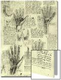 Functions of Human Hand Poster by  Leonardo da Vinci