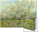 The White Orchard, 1888 Prints by Vincent van Gogh