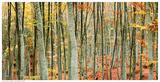 Beech Forest Prints by  Mavroudakis