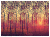 Poplar Trees in the Setting Sun Poster