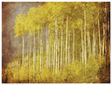 Autumn Aspen Forest Prints