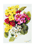 Primroses, White, Yellow, Pink and Red, 2000 Giclee Print by Joan Thewsey