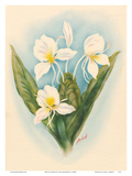 White Ginger Art by Ted Mundorff