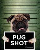 Rachael Hale- Pug Shot Banjo Pósters por Hale, Rachael
