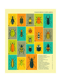 Common Beetles of North America Prints by Jazzberry Blue