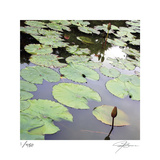 Lily Pads Limited Edition by Ken Bremer