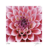 Dahlia Limited Edition by Ken Bremer