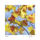 Yellow Oak Leaves Limited Edition by Ken Bremer