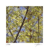 Spring Leaves 2 Limited Edition by Ken Bremer