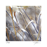 Grass 9 Limited Edition by Ken Bremer