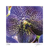 Orchid Square Limited Edition by Ken Bremer