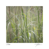 Grass Square 32 Limited Edition by Ken Bremer