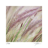 Fountain Grass 7 Limited Edition by Ken Bremer