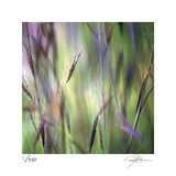 Grass Abstract 4 Limited Edition by Ken Bremer