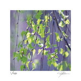 Spring Leaves Limited Edition by Ken Bremer