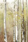 Serenity Birch Art by Allison Pearce