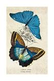 Kirby Butterflies II Posters by Christine Zalewski
