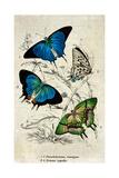 Kirby Butterflies I Art by Christine Zalewski