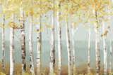 Soft Birch Prints by Allison Pearce