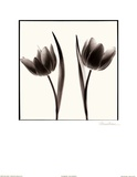 Tulip Shades II Posters by Mark Baker