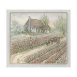 Tulips Giclee Print by Kim Jacobs