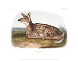 Cervus Virginanus, Common or Virginian Deer, Fawn Giclee Print by John James Audubon