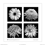 Flora Photographica No. 1 Poster by Mark Baker