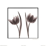 Tulip Shades II Print by Mark Baker