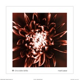 Chocolate Dahlia Posters by Mark Baker