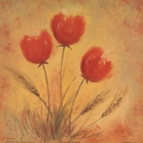 Orange Tulips and Wheat Poster by Serena Sussex