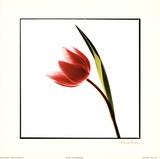 Tulip Impressions I Print by Mark Baker