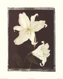 White Lilies in Chocolate Prints by Deborah K. Ellis