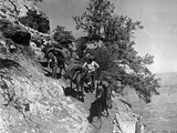 Donkeys in the Grand Canyon National Park, 1927 Photographic Print by  Süddeutsche Zeitung Photo