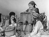 Grape Harvest in Switzerland, 1930 Photographic Print by Scherl Süddeutsche Zeitung Photo