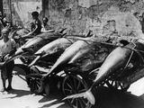 Transport of Tuna Fish in Palermo, 1938 Photographic Print by Scherl Süddeutsche Zeitung Photo