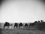 Caravan in the Desert, 1933 Photographic Print by Scherl Süddeutsche Zeitung Photo
