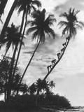 Palms on Hawaii, 1930s Print by  Süddeutsche Zeitung Photo