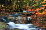 Fall Colors Surround a Roaring Waterfall in a Forest Stream Stretched Canvas Print by Robbie George