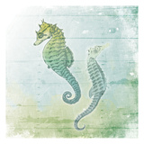Sea Foam Seahorse Prints by Jace Grey
