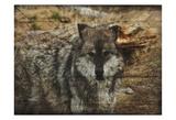 Alfa Wolf Poster von Sheldon Lewis