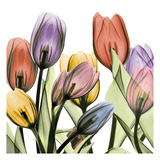 Tulipscape 2 Kunstdruck von Albert Koetsier