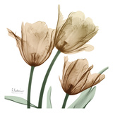 Autumn Tulips 1 Prints by Albert Koetsier