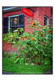 Country Store Sunflowers Prints by Suzanne Foschino